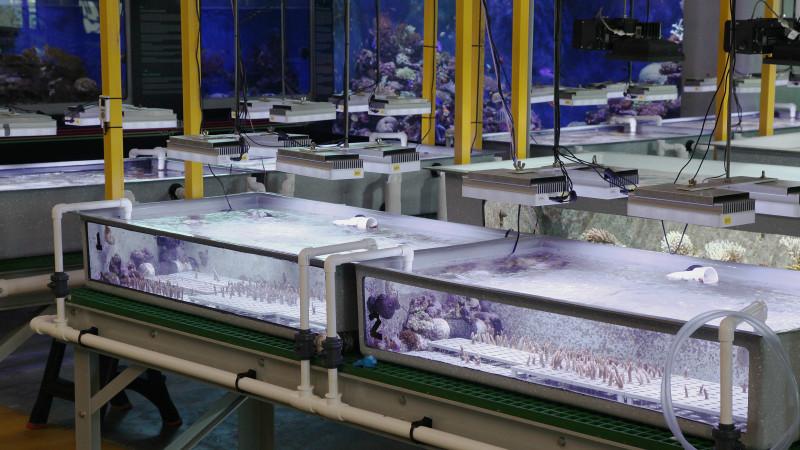 Aquarien im National Sea Simulator