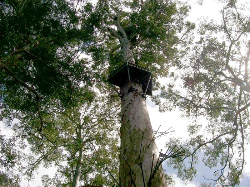 ein wirklich großer, großer Baum !