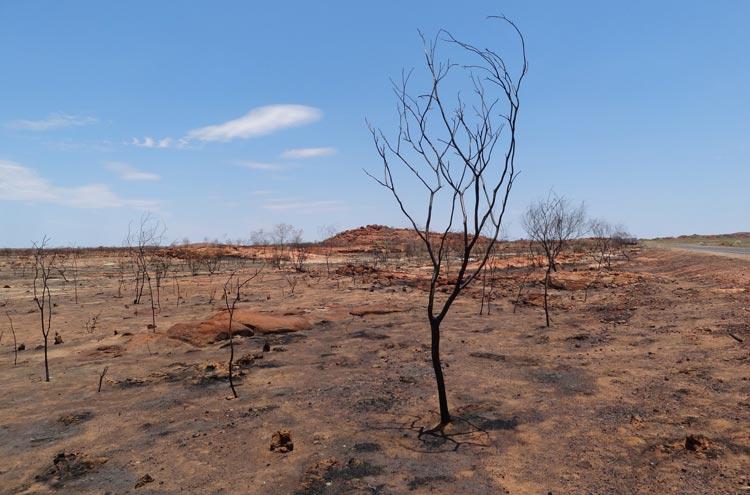 Landschaft nach einem Buschfeuer