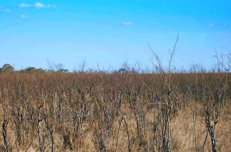 Trockene Graslandschaft im Outback Australiens