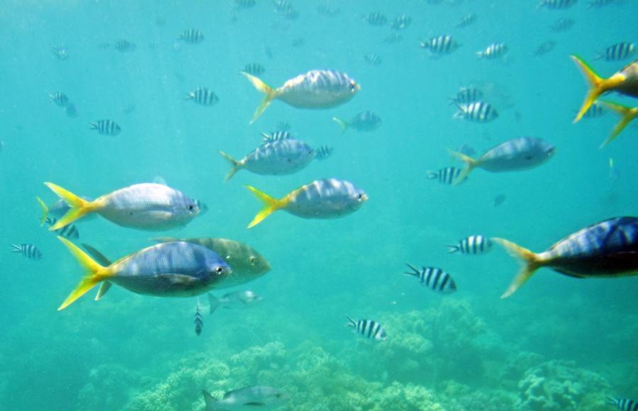 verschiedene Fische im Riff
