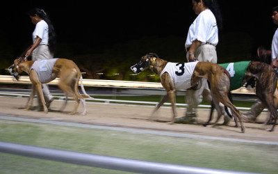 Greyhound1-640