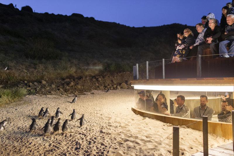 Pinguin Parade: neue Beobachtungsmöglichkeiten