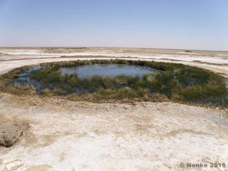 Wasserquelle im Outback