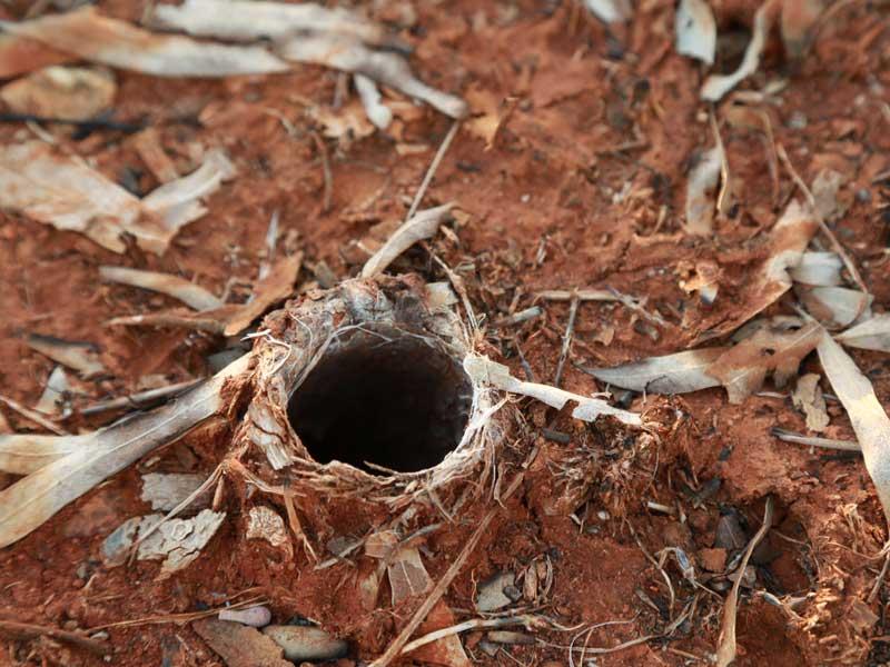 Loch in dem die Spinne gefunden wurde (Northern Territory)