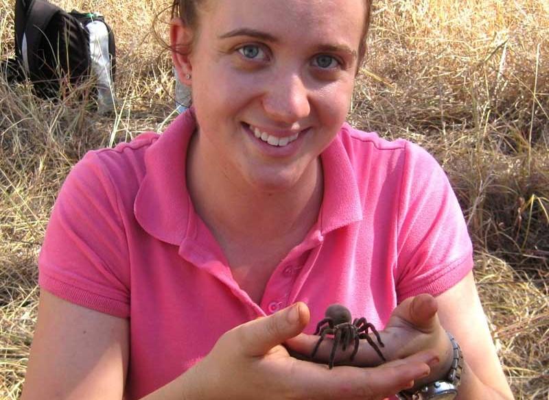 Die neu entdeckte Spinne im Northern Territory