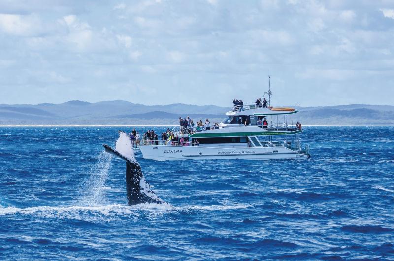 Viele solcher Jachten stechen täglich in See, um Touristen die Walvielfalt im Pazifik zu zeigen