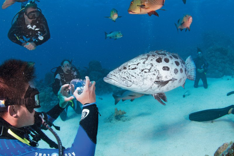 unterwasseraufnahmen von korallenriffs