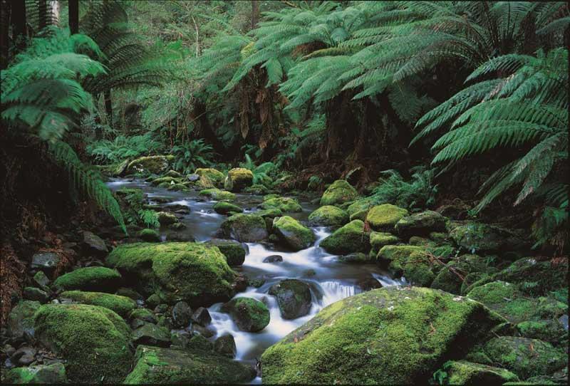 Regenwald im Hinterland der Great Ocean Road